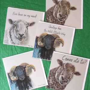 Rachel_Dubber_Sheep_Cards